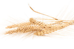 Ears of wheat isolated on white Stock Photography