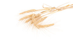 Ears of wheat isolated Stock Images