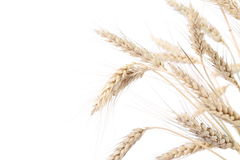 Ears of wheat. Isolated on a white background Stock Photos