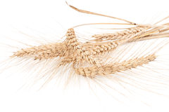 Ears of wheat isolated on white Royalty Free Stock Photos