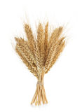 Ears of wheat isolated on white Stock Images