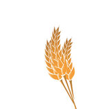 Ears of wheat isolated on white background Stock Photos