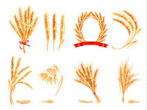 Ears of wheat, oat, rye and barley. Royalty Free Stock Photos
