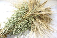 Ears of wheat and oats Stock Images