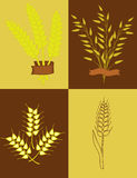 Ears of wheat and oats. Illustration with ears of wheat and oats Royalty Free Stock Photography
