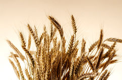 Ears of wheat Stock Photos