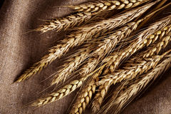 Ears of wheat Royalty Free Stock Images