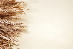 Ears of wheat over white. Stock Image