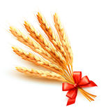 Ears of wheat with red bow. Vector Stock Image