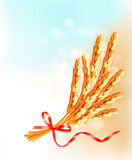 Ears of wheat  with red ribbon. Royalty Free Stock Photo