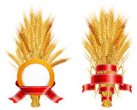 Ears of wheat & ribbon. Ripe yellow wheat ears with red ribbon, agricultural illustration Stock Image