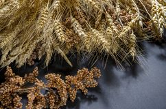 Ears of Wheat, rye, millet pshenici assembled in bouquet stock photography