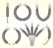 Ears of wheat and rye set. Vector Royalty Free Stock Images