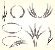 Ears of wheat and rye set. Vector Stock Photos