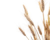 Ears of wheat and seeds isolated on white Royalty Free Stock Photos