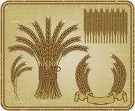 Ears of wheat, set. Vector illustration. Royalty Free Stock Photography