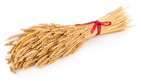 Ears of wheat tied with red ribbon Royalty Free Stock Photography