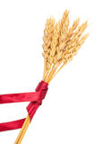 Ears of wheat tied with red ribbon Royalty Free Stock Images