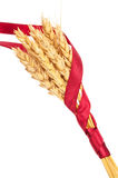 Ears of wheat tied with red ribbon Royalty Free Stock Photo