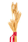Ears of wheat tied with red ribbon Stock Photo