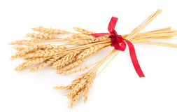 Ears of wheat tied with red ribbon Royalty Free Stock Photos