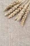 Ears of wheat on top of the burlap background Royalty Free Stock Image