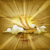 Ears of wheat, vector background Royalty Free Stock Image