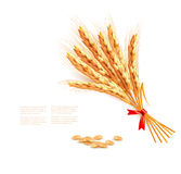 Ears of wheat. Vector illustration. Royalty Free Stock Image