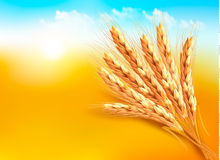 Ears of wheat. Vector illustration Royalty Free Stock Photography