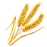 Ears of wheat vector illustration  hand drawn Stock Photos