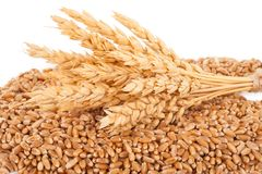 Ears of wheat and wheat grains Royalty Free Stock Images