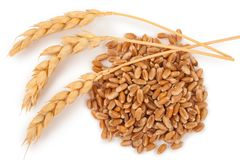Ears of wheat and wheat grains Royalty Free Stock Image