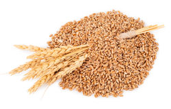 Ears of wheat and wheat grains Stock Photo