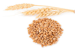 Ears of wheat and wheat grains Stock Image