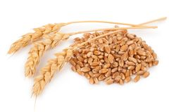 Ears of wheat and wheat grains Stock Images