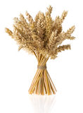 Ears of wheat on white Royalty Free Stock Images