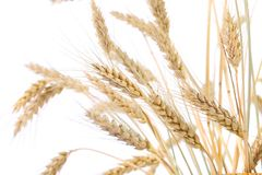 Ears of wheat. On a white background stock images