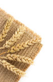 Ears of wheat on white Stock Photography