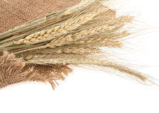 Ears of wheat Royalty Free Stock Image