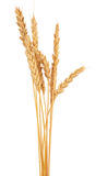 Ears of wheat. On white background Stock Images