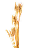 Ears of wheat. On white background stock photos