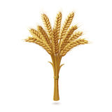 Ears of wheat on white background. Bunch of durum wheat with shadow  on white background. Vector illustration Royalty Free Stock Image