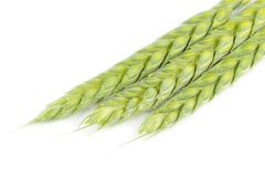 Ears of Wheat on White Background Royalty Free Stock Photography
