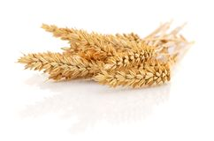 Wheat Bunch on white. royalty free stock photo