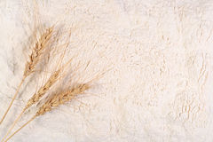 Ears of wheat on a white flour Royalty Free Stock Photo