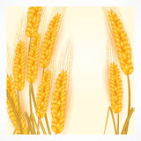 Ears of wheat on white Royalty Free Stock Image