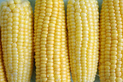 Ears of yellow corn Stock Photos