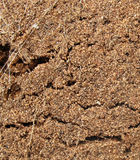 Earth. Close-up of turned soil with roots of plants Stock Photo