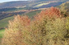 Earth colors in the autumn Royalty Free Stock Photo