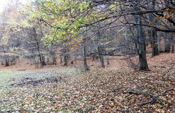 Earth colors in the autumn Royalty Free Stock Photos